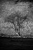 Devil's Dyke (agataurbaniak) Tags: devilsdyke sussex leica m monochrom leicamonochrom typ246 type246 246 monochromatic blackandwhite blackwhite digital rangefinder canon ltm m39 leicathreadmount 135mm 135 f35 35 canon135mmf35ltm orangefilter orange filter