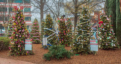 Christmas Lights Marietta Square (JavaJoba) Tags: christmastree christmaslights marietta mariettasquare