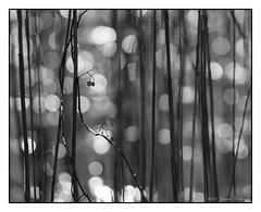 Winter Berries on White Lake - 2017 Re-Mix (GAPHIKER) Tags: white lake whitelake berries reeds bokeh sky bw