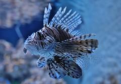 Fish (Hugo von Schreck) Tags: hugovonschreck yourbestoftoday canoneos5dsr tamronsp35mmf18divcusdf012 fish fisch