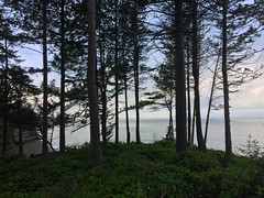 2017 YIP Day 364: I mean..come on (knoopie) Tags: 2017 december iphone picturemail trees cliff clallam cozynewyear 2017yip project365 365project 2017365 yiipday364 day364
