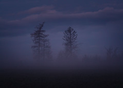 Morning Mystery (redfurwolf) Tags: nature outdoor landscape tree fog simplicity simplistic simple forest ngc bavaria clouds sky morning gras field redfurwolf sonyalpha a99ii sal70200f28gii sony