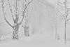 Schneetreiben (efgepe) Tags: 2017 70mm dezember schnee schneetreiben snow kastanienallee neuss stadtwald schneefall bw sw silverefexpro lightroom nik
