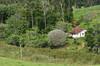 Caminhos da roça (Márcia Valle) Tags: green verde nature natureza spring primavera minasgerais brasil juizdefora brazil mataatlânticoa márciavalle nikon d5100 roça casa house arquiteturarural interiordobrasil countryscene