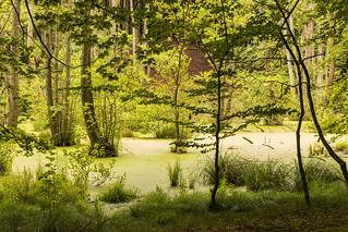 Wald-Oase
