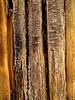 Strong and Durable Ribs of Dead Saguaro (Chic Bee) Tags: strong durable saguaro ribs naturewalk sonorandesert sabinocanyon tucson arizona usa southwesternusa americansouthwest catalinamountains