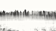ICM (Stefano Rugolo) Tags: stefanorugolo pentax k5 pentaxk5 kepcorautowideanglemc28mm128 snow blackandwhite monochrome icm abstract landscape tree hälsingland sweden sky forest wood