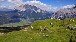 Lermoos, Grubigstein (2233m), Tirol - Austria (150232119)