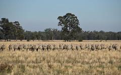 'Gilway' Balladoran Road, Gilgandra NSW