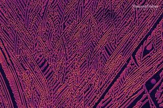 ZnTe A self assembled goldsmith pattern