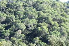 Día 208 (acido askorbiko) Tags: arboles trees green nature mosaic leafy pattern shape woods forest picture landscape portrait photo photography photographer photonature noedit nofilters shoot shooting