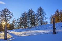 Winter  impressions-2 (milance1965) Tags: winter sonne stern sonnenstern canon schnee weiss wald landschaft panorama 35mmf2 5dmk2