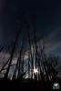 Moontree (andrea.prave) Tags: ticino castellettodicuggiono castelletto parcodelticino lombardia lombardy natura nature 自然 eðli cuggiono tree alberi woods bosco silhouette sagoma silueta シルエット notte night noche nacht ночь ليل 夜