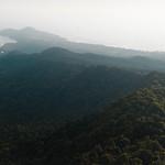 Hazy Jungle thumbnail