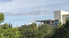 Watching the Flight of the Crows (soniaadammurray - Off) Tags: video crows sky clouds trees fly school windows group family friends perch electricpoles nature dock breeze beauty grace birds