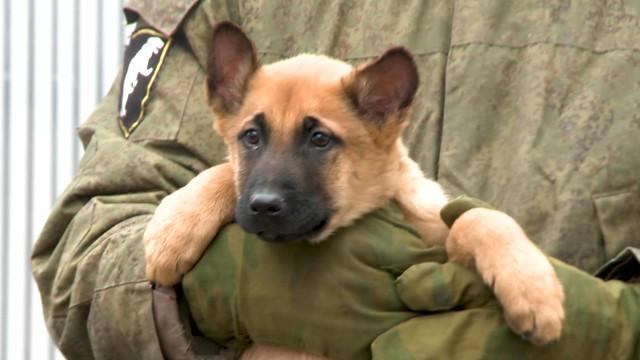Киностудия Росгвардии кГоду собаки сняла «Новогоднюю историю, рассказанную малинуа»