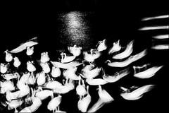 Berlin Swan Art (Armin Fuchs) Tags: arminfuchs berlin swan kreuzberg night animal light