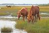 Marsh ponies (hennessy.barb) Tags: assateague ponies wild horses marsh maryland assateagueisland wildponies wildhorses