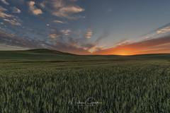 Thinking Warm (NikonDigifan) Tags: sunset palouse palousehills agriculture wheat easternwashington pacificnorthwest farming nikond750 nikon niksoftware colorefexpro mikegassphotography tamron tamron1530 tamronlenses
