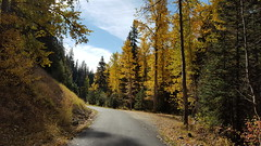 Fall colors along North Fork Salmon Creek (OkaWenNF) Tags: road forest tree trees nature view sky golden yellow leaves leaf okanoganwenatchee national north fork salmon creek tonasket ranger district