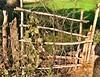 A Gate (tanvirkhan007) Tags: chhattisgarh balod 2018 india farm gate