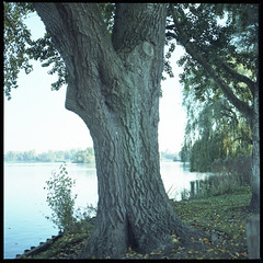 Tales of Trees (gelelie / Gerda) Tags: hasselblad diycolor portra expired