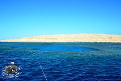 Reefs in Hurghada (ShaunMYeo) Tags: egypt egipte egjipt مصر եգիպտոս misir egipto егіпет মিশর egipat египет 埃及 egypten egypte egiptujo egiptus ehipto egypti exipto ეგვიპტეში ägypten αίγυπτοσ ઇજીપ્ટ misira מצרים मिस्र egyiptom egyptaland mesir egittoエジプト ಈಜಿಪ್ಟ್ мысыр ប្រទេសអេហ្ស៊ីប 이집트 ອີຢິບ ēģipte egiptas ejipta ഈജിപ്ത് eġittu ihipa इजिप्त मिश्र egipt egito ਮਿਸਰ египат egepeta ඊජිප්තුවේ masar misri миср எகிப்து ఈజిప్ట్ อียิปต์ mısır єгипет misr egipti redsea
