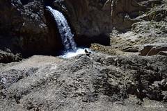 ¿Cómo salgo en ésta? (pepelara56) Tags: pájaros cascada roca río agua ave
