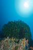 Sahoung I - 4 (Rhapsody-In-Blue) Tags: indonesia indonésie sulawesi célèbes manado gangga ganggaisland bangka bangkaisland underwater sea underwaterambiance wideangle grandangle paysage ambiance canon1740mm sealife marinelife sahoungi sahoung corals coral sponge sponges éponges éponge corail coraux