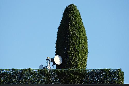 Antenne et thuya
