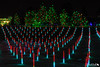 Colored Cattails (dekish1) Tags: 2v3a4499jpg copyrightdavidkish2017 canon7dmarkii canon1755mm denverbotanicgardens blossomsoflight color christmaslights lightdisplay