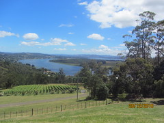View of vines on slope down to River Tamar, Launceston (d.kevan) Tags: grapevines rivers trees views rivertamar launceston tasmania grass fences