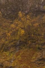 Autumn Colours on Gearr Aonach (Chris_Hoskins) Tags: scottishlandscape wwwexpressionsofscotlandcom scottishlandscapephotography landscape autumn scotland glencoe
