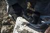171213-Z-OL842-1182 (193rd SOW) Tags: panationalguard airnationalguard pennsylvanianationalguard afsoc airforcespecialoperationscommand pang paang 193rdspecialoperationswing 193rdsow fortindiantowngap reots lfa lightningforceacademy regionalequipmentoperatorstrainingschool angschoolhouse heavyequipment engineeringinstallation vehicletraining annville pennsylvania unitedstates