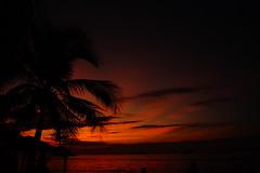 Sunset (cielopedernal) Tags: ixtapa zihuatanejo mexico méxico beach playa places sunset atardecer cielo sky animal animales animals reptil reptile iguana cangrejo arena sea sand ocean oceano mar blue crocodile cocodrilo