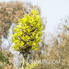 Puya chilensis-4 (SUBENUIX) Tags: bromeliaceae puyachilensis suculentas subenuix subenuixcom planta suculent suculenta botanic botanical