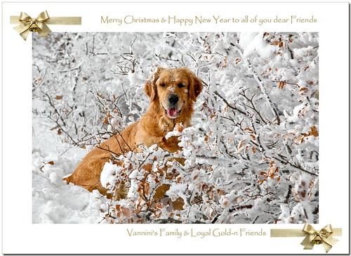 Merry Christmas Dear Flickr's Friends :o)))