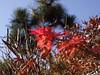 紅葉 (red leaves) (Paul_ (shin.ogata)) Tags: 赤 red