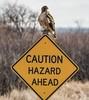 Hazard Ahead (mnryno) Tags: roadsign streetsign beak wildlife colorado sign talons bird hawk