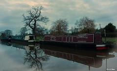 Float on. (Lee1885) Tags: canal boat cheshire wrenbury narrowboat shropshireunion reflection tree water