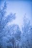 blue moment (sami kuosmanen) Tags: blue suomi snow taivas talvi tree trees europe eerie luonto light landscape lumi nature north metsä maisema sininen hetki moment sataa snowing finland forest