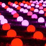 Christmas at Kew thumbnail