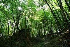 here means everywhere (A.Iwańska) Tags: forest wood drzewa tree polska polishphoto lubelskie natura nature naturelovers sun landscape sunshine light lighting światłobieg swiatlobieg iwanska olaiwanska światło swiatlo nikon sigma fullframe fx las green park d750