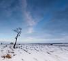 Big Moor in Winter (Peter Quinn1) Tags: bigmoor winter derbyshire lonetree december