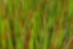 Blurred Grass (basswulf) Tags: green red grass abstract d40 vivitar90mmf25macro lenstagged unmodified 32 image:ratio=32 camerasetting:aperture=f8 permissions:licence=c 20170526 201705 3008x2000 rhs rosemoor rhsrosemoor devon england uk
