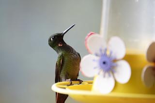 - A bird with attitude _