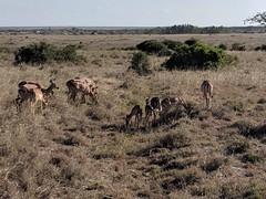2017-12-28 16.34.41 (dcwpugh) Tags: travel nairobi kenya safari nairobinationalpark
