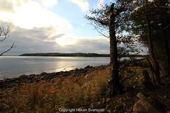 Jeløy. Moss. Norway. (Håkan Svanqvist) Tags: tree grass sky ocean sea rock wood stone shoreline landscape oslo fjord jeløy moss norway water canon eos70d efs1018mm forest