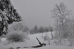 (Uli He - Fotofee) Tags: ulrike ulrikehe uli ulihe ulrikehergert hergert nikon nikond90 fotofee winter dezember rhön schnee eis kälte kalt baum bäume hund sheltie shetlandsheepdog fleur winterlich weihnachtlich vorweihnachtlich advent 3advent 2017