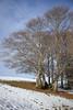 (Enrico Carpi) Tags: scout boyscout campetto camp camping trekking snow winter veneto italy canon photography canon5dmkii 5dmkii trees fog clouds good vibes nature freedom convo known vallastaro lastaro asiago